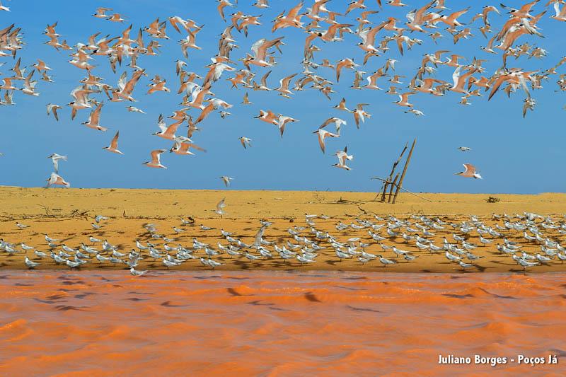 Gaivotas sobrevoam o mar em Regência (ES).
